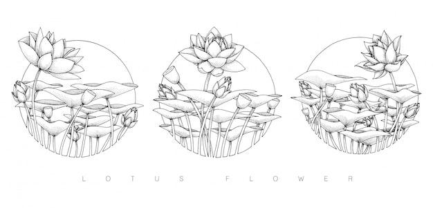 Zestaw ilustracji kwiat lotosu