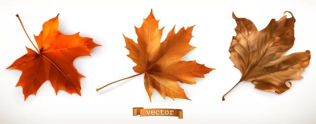 Zestaw ilustracji liść klonu