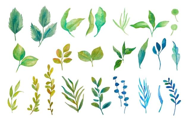 Zestaw ilustracji liści akwarela
