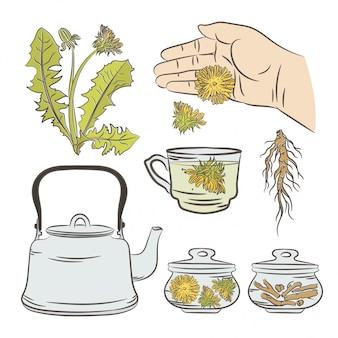Zestaw ilustracji medycznych aplikacji dandelion pharmacy