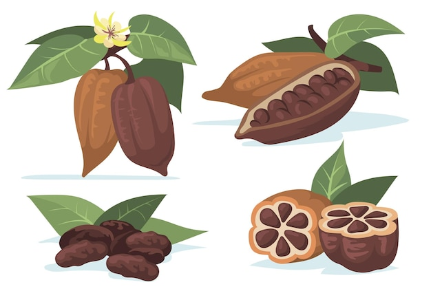 Zestaw ilustracji płaski kolorowy ziarna kakaowego.