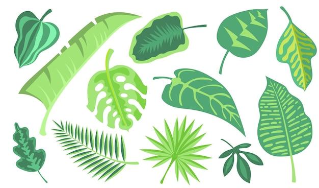 Zestaw ilustracji płaski zielony egzotyczny liść. kreskówka monstera i dżungla palmowa pozostawia kolekcję ilustracji wektorowych na białym tle. tropikalne rośliny i koncepcja dekoracji botanicznej