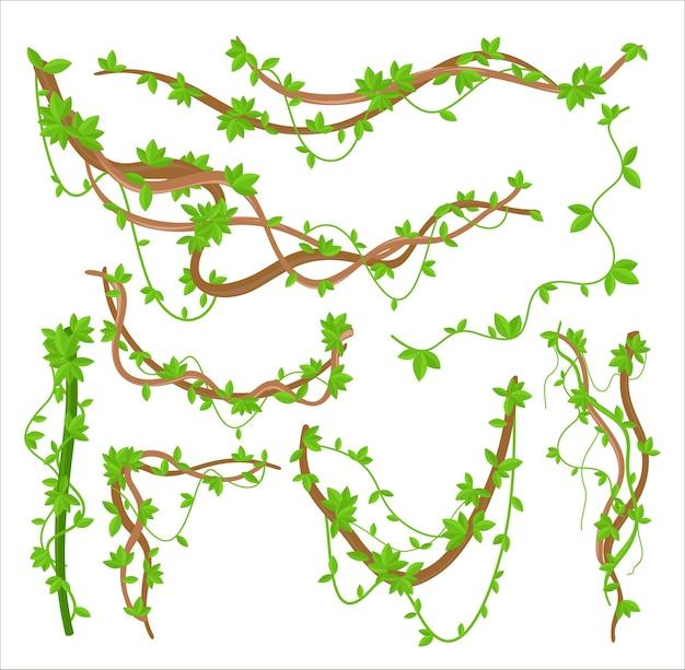 Zestaw ilustracji płaskich pnączy zielonych liści liany. skręcająca roślina tropikalnych lasów deszczowych