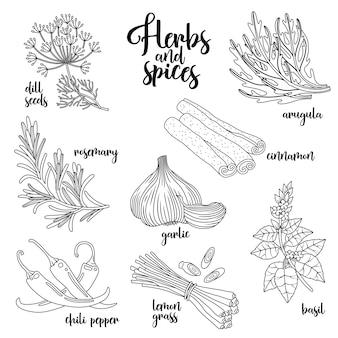 Zestaw ilustracji przyprawy i zioła.