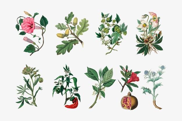 Zestaw ilustracji roślin botanicznych
