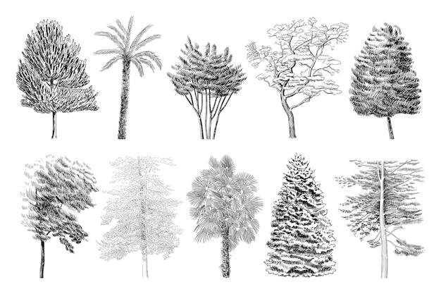 Zestaw ilustracji różnych drzew