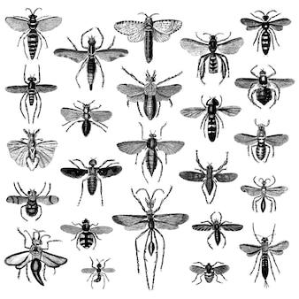Zestaw ilustracji różnych owadów