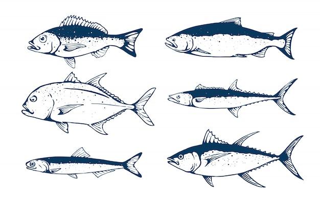 Zestaw ilustracji ryb