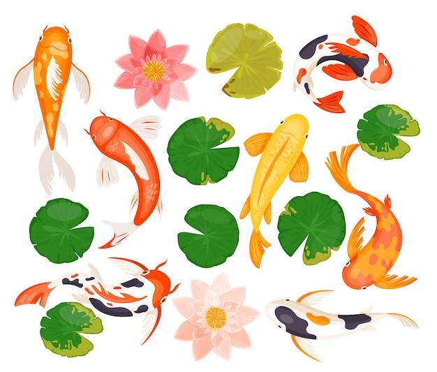 Zestaw ilustracji ryby karp koi.