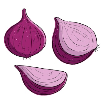Zestaw ilustracji świeżej cebuli z ręcznie rysowanym stylem