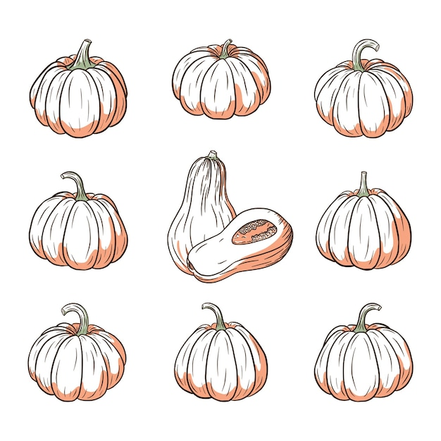 Zestaw ilustracji świeżej dyni. kolekcja szkiców do squasha do projektowania i dekoracji naklejek, nadruków, zaproszeń, menu i kart okolicznościowych. wektor premium