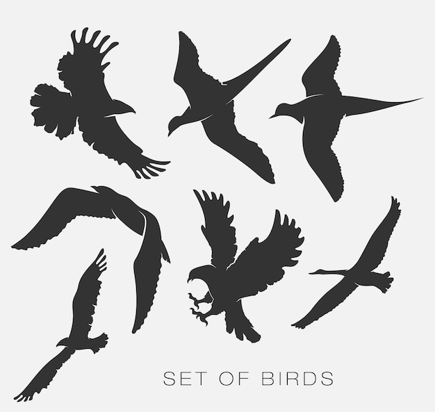 Zestaw ilustracji sylwetki ptaków mew.