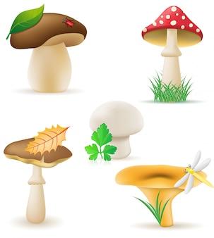 Zestaw ilustracji wektorowych grzybów