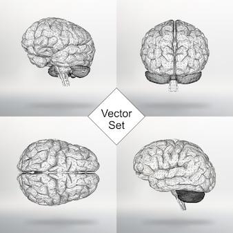 Zestaw ilustracji wektorowych ludzki mózg. siatka strukturalna wielokątów. streszczenie tło wektor koncepcja kreatywnych. sieć molekularna. papier firmowy i broszura w stylu wielokąta.