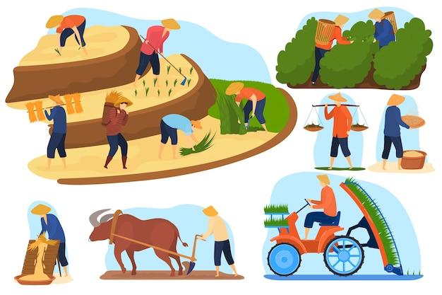 Zestaw ilustracji wektorowych pól ryżowych w azjatyckiej farmie, rolnicy z kreskówek pracują na tarasowych plantacjach ryżu