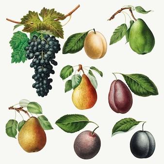 Zestaw ilustracji winogron, gruszek i śliwek