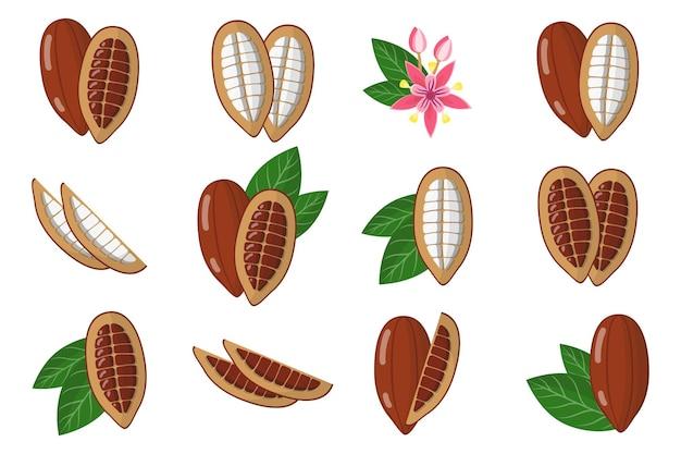 Zestaw ilustracji z egzotycznymi owocami kakao, kwiatami i liśćmi na białym tle.