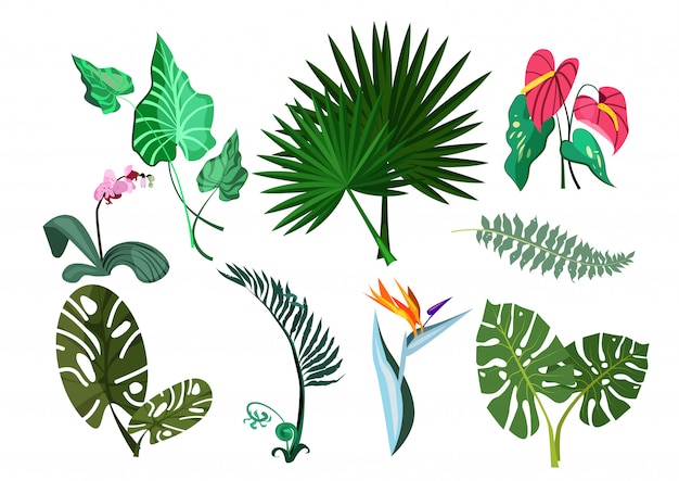 Zestaw ilustracji zielonych roślin