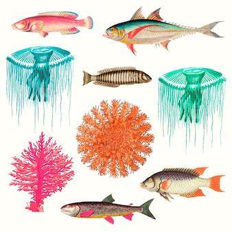 Zestaw ilustracji życia morskiego w stylu vintage, zremiksowany z dzieł należących do domeny publicznej