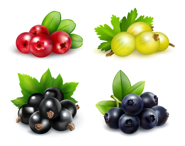 Zestaw izolowanych klastrów jagodowych w realistycznym stylu
