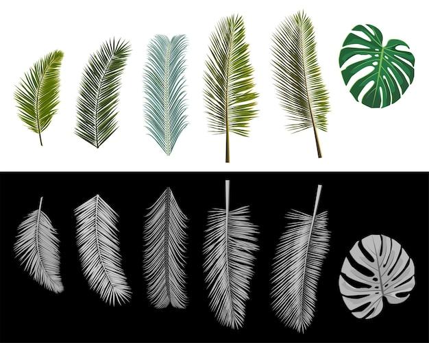 Zestaw izolowanych realistycznych liści palmowych w kolorze i skali szarości. ilustracja wektorowa.