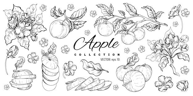 Zestaw jabłek.
