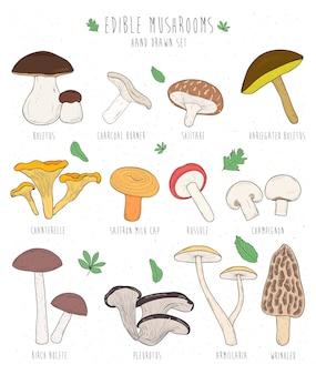 Zestaw jadalnych grzybów z tytułami. ręcznie rysowane wektor ilustracja kolekcji borowik, węgiel drzewny, shiitake, kurki. kolorowy.