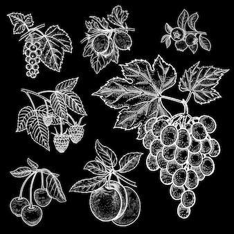 Zestaw jagód i owoców. biała kreda na czarnej tablicy.