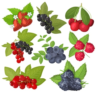 Zestaw jagód na białym tle. jagody, porzeczki, wiśnie, truskawki, jeżyny, maliny.