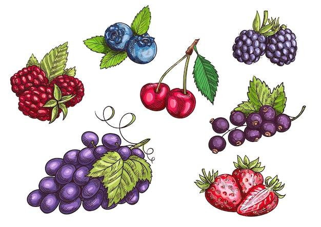 Zestaw jagód. ręcznie rysowane kolor szkic ołówkiem. wektor truskawka, jeżyna, jagoda, wiśnia, malina, czarna porzeczka, jagody winogronowe z liśćmi