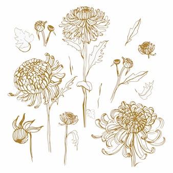 Zestaw japońskiej chryzantemy. kolekcja z ręcznie rysowane pąki, kwiaty, liście.