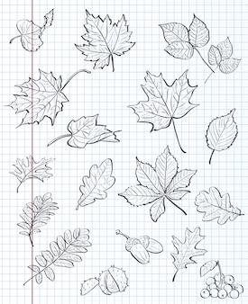 Zestaw jesiennych liści, kasztanów, żołędzi i kaliny na tle zeszytu w klatce. czarny kontur