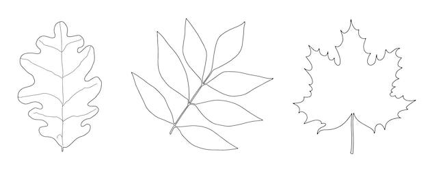 Zestaw jesiennych liści klonu dębowego jesionu liniowego szkicu doodle