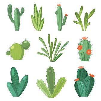 Zestaw kaktusów kreskówka. ustaw jasne kaktusy i aloes. kolorowe, jasne kwiaty kaktusów na białym tle