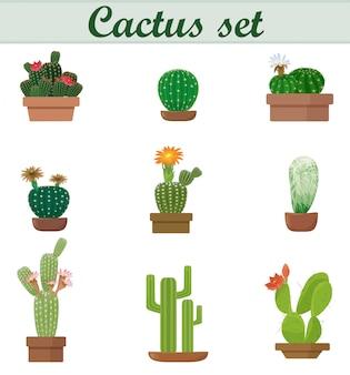 Zestaw kaktusów