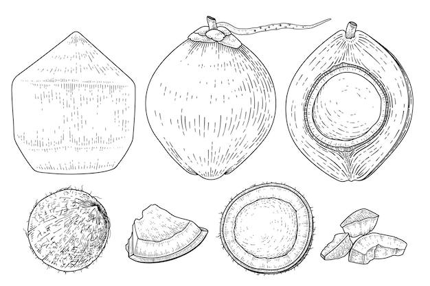 Zestaw kokos ręcznie rysowane wektor ilustracja w stylu retro. całość, połówka, skorupa i mięso kokosowe.