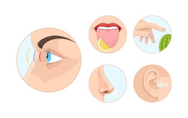 Zestaw kół pięciu ludzkich uczuć. zmysły wzroku, węchu, dotyku, słuchu i smaku. usta, język, usta, ręka, nos, oko i ucho przy zaokrąglonych ikonach. anatomia edukacja nauka narządu zmysłów kreskówka wektor