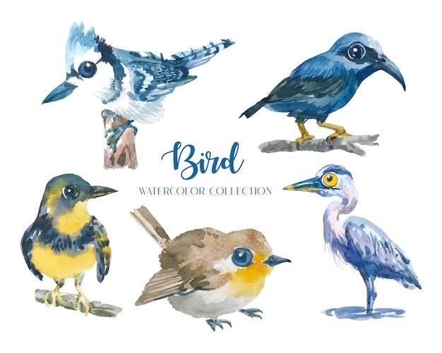 Zestaw kolekcja ładny i kolorowy ptak akwarela luźny styl (5 ptaków).