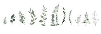 Zestaw kolekcja zielonych liści ziół w stylu akwareli.