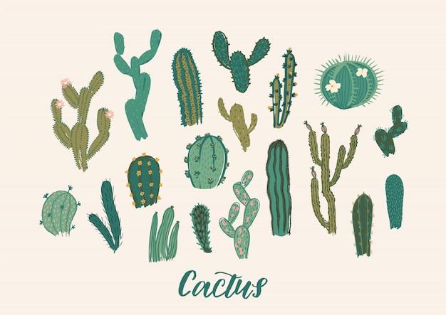 Zestaw kolekcji kaktusów.