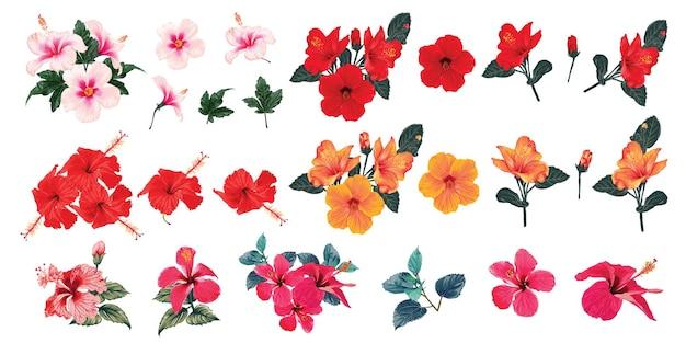 Zestaw kolekcji na białym tle kwiaty hibiskusa