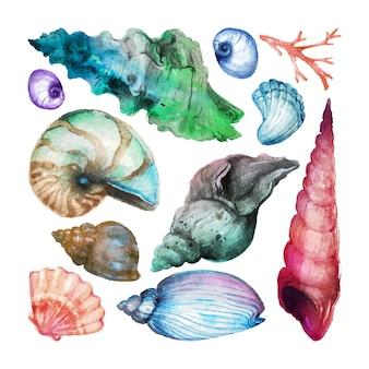Zestaw kolekcji ręcznie rysowane akwarelowe muszle morskie