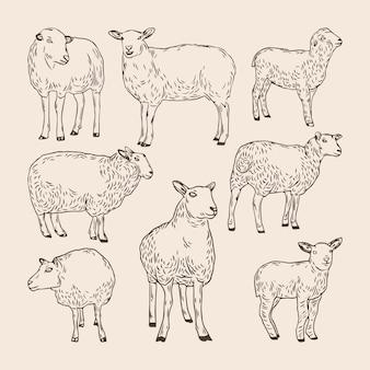 Zestaw kolekcji ręcznie rysowanych owiec
