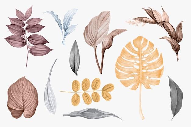 Zestaw kolekcji tropikalnych liści