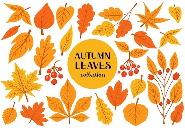 Zestaw kolorowych jesiennych liści i jagód izolowany na białym tle prosty rysunek płaski styl