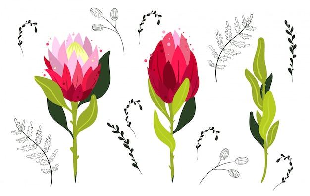 Zestaw kolorowych kwiatów protea. element projektu.
