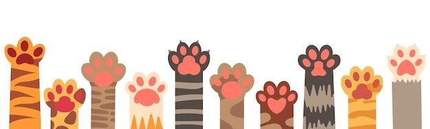 Zestaw kolorowych łap kota