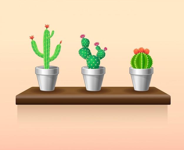 Zestaw kolorowych lekkich roślin doniczkowych