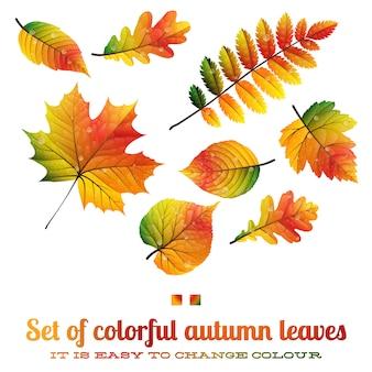 Zestaw kolorowych liści jesienią
