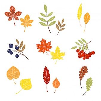 Zestaw kolorowych liści jesienią.